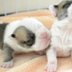 犬を飼う費用|犬の生涯にかかる飼育費用は?