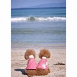 トイプードルと行ける関東の海水浴場|トイプードルと海へ行く時の注意点