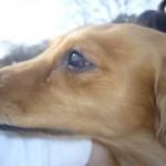 愛犬のストレスチェック|犬がストレスを溜める原因と解消法
