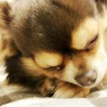 愛犬が寝過ぎで心配!犬の睡眠時間はどのくらい?