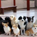 犬の名前人気ランキング【2016年最新】「チョコ」が人気急上昇!