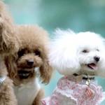 愛犬の犬服がハンドメイドできる!犬服ハンドメイドの作り方と型紙が見られるサイト