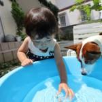 犬のプールでの遊び方 犬専門プール施設と犬の自宅用プール