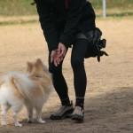 犬は飼い主の死を理解できる?犬にとっての飼い主の死