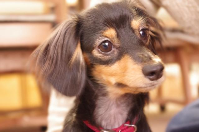 犬は人間の言葉を理解している!?|犬に言葉をかける時の注意点