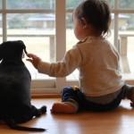 初めて犬と暮らす前に確認しておきたい6つのチェックポイント