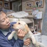 江澤文子ブリーダーインタビュー|ラブラドールレトリバー|神奈川県