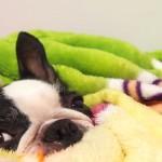 犬にも冷え性ってあるの!?|犬の身体の冷えによる症状とその対策