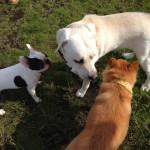 犬同士も会話できる? 犬同士が会話で仲良くなる方法