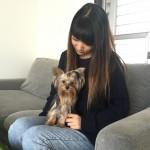 川畑友貴ブリーダーインタビュー|ヨークシャテリア(ヨーキー)|神奈川県