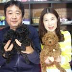 斉藤光博ブリーダーインタビュー|トイプードル|埼玉県