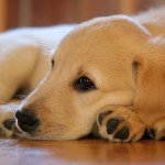 犬の虫除けの落とし穴!愛犬を虫から守る虫除け対策法