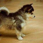 ミックス犬の種類 | 話題のミックス犬・人気種類ランキング!