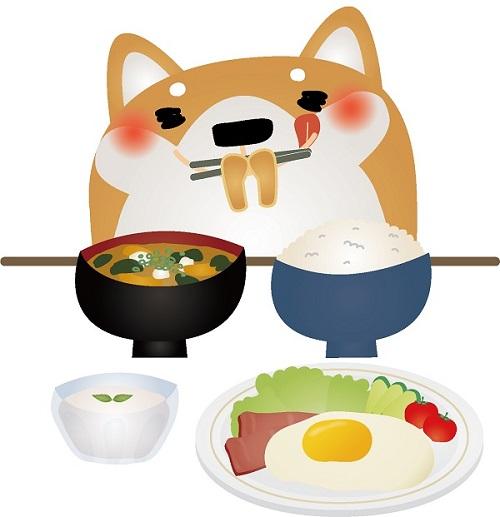 柴犬の餌はどんなものが適切?食事の量や与え方