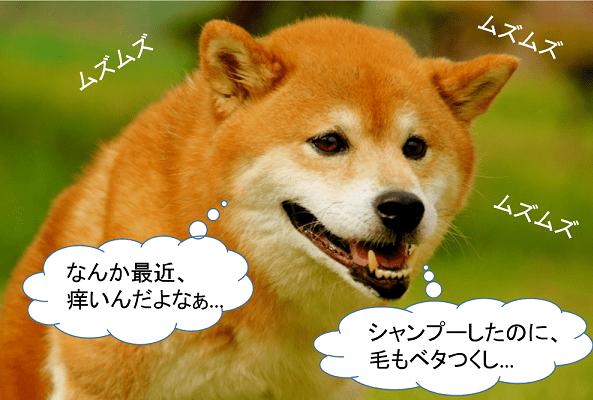 柴犬は皮膚病にかかりやすい?アトピー性皮膚炎にご用心!