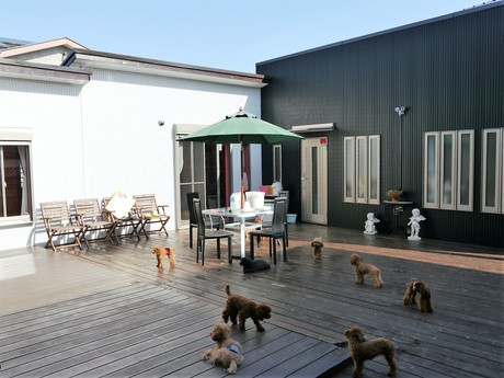 菊地純一ブリーダー(茨城県) | ブリーダーの子犬直販サイト【ブリーダーワン】